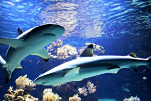 Sharks: Serial Killers of the Seven Seas?