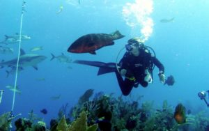 3 Facts You Need to Know About Dive Insurance