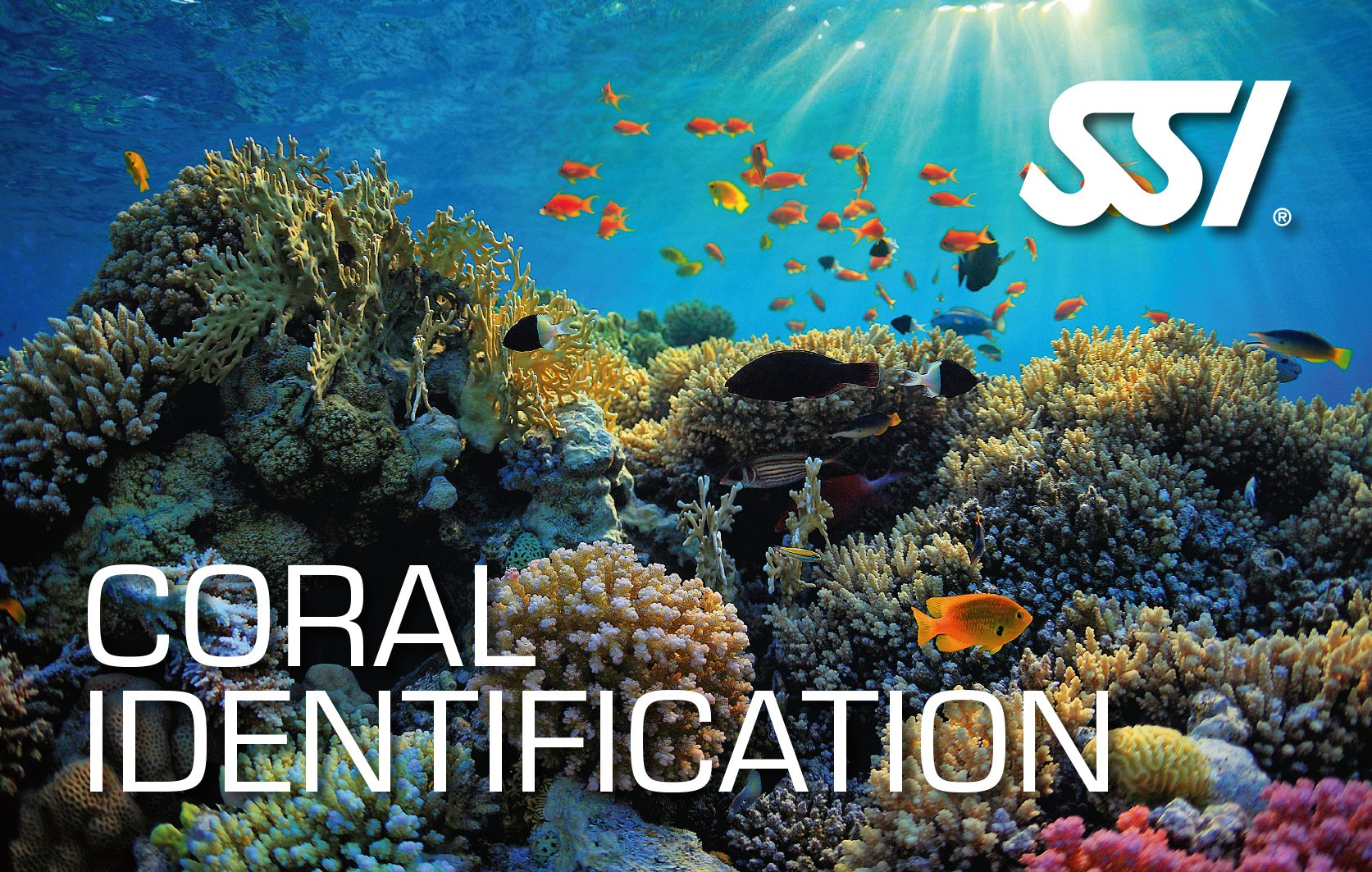 SSI Coral Identification Course | SSI Coral Identification | Coral Identification | Deep Blue Scuba | Scuba Course