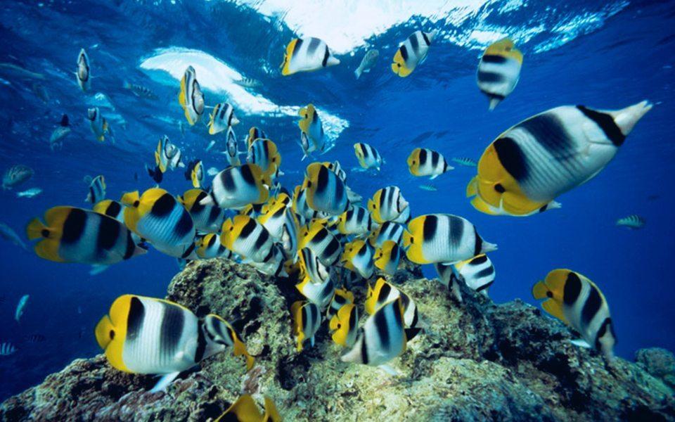 Manado Marine | Manado | Indonesia | Manado Indonesia | Scuba Trips | Marine | Marine Life | Deep Blue Scuba