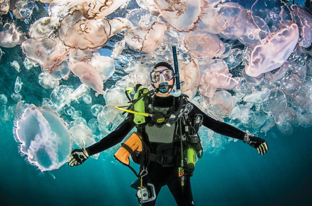are-jellyfish-dangerous-to-scuba-divers