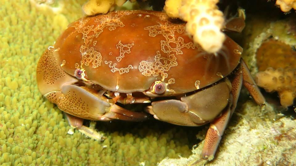15.Crab - Shaun Gilmour