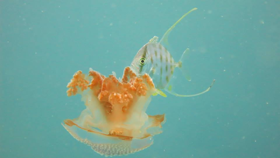 16.Jellyfish - Shaun Gilmour