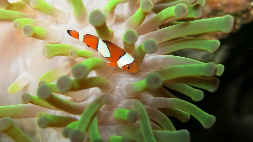 20.Clownfish - Shaun Gilmour