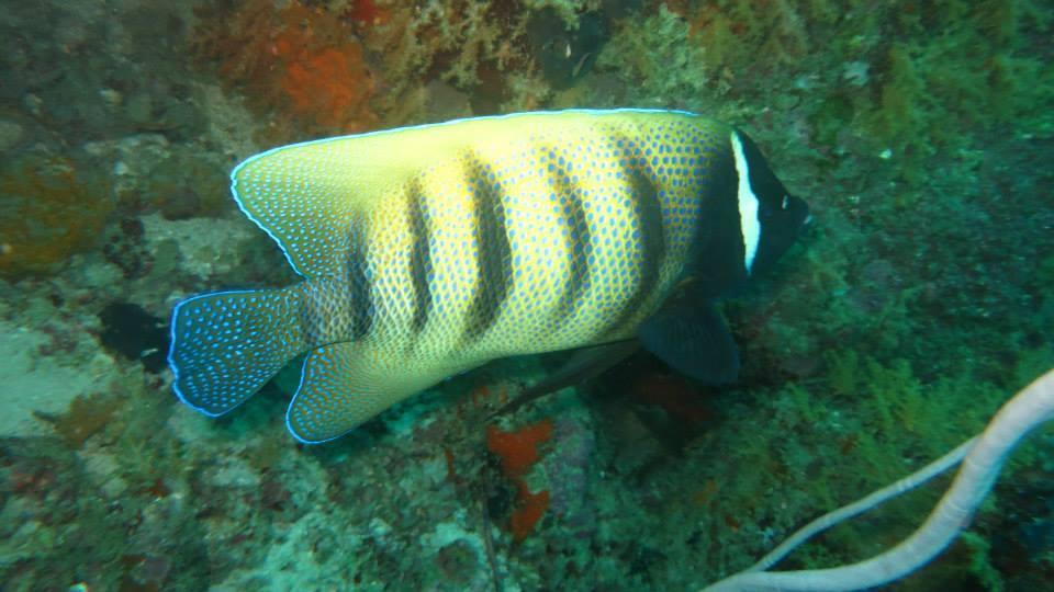 22.Butterflyfish - Shaun Gilmour