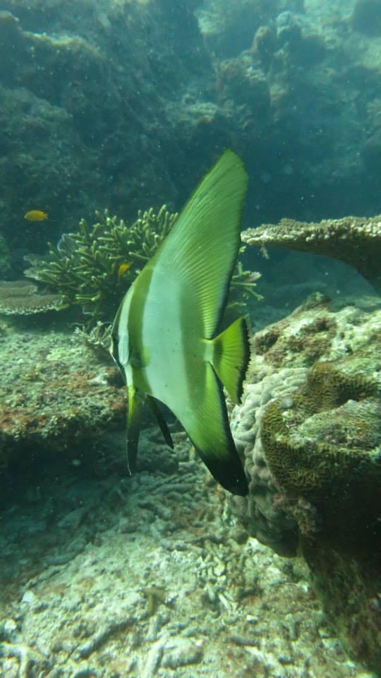 23.Batfish - Shaun Gilmour