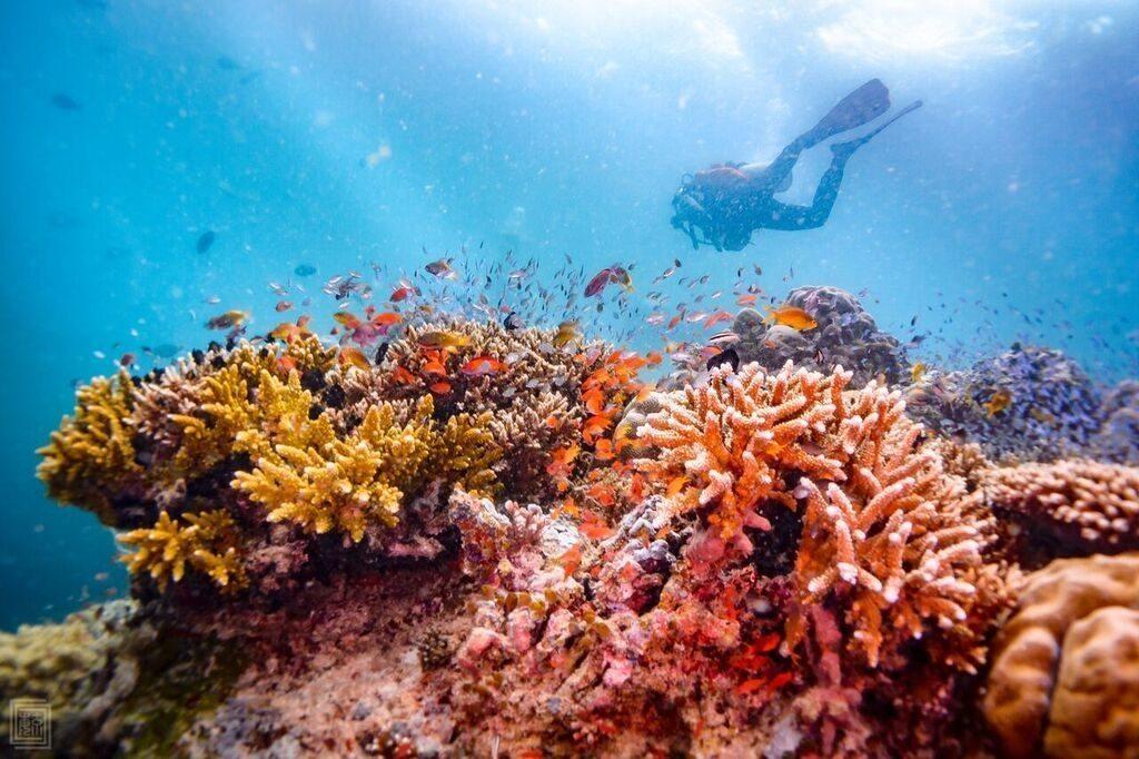 Experience-scuba-diving-underwater