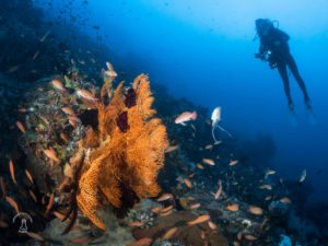 3 Reasons why Anilao should be on top of your diving wish-list