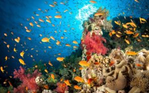5 dive sites you need to explore this Christmas