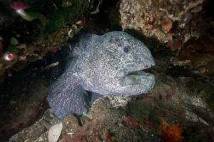 5 Most Romantic Underwater Creatures