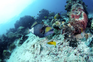 Dive Sites in Asia for Beginners