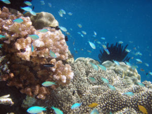 Top Dive Sites to Explore in Indonesia