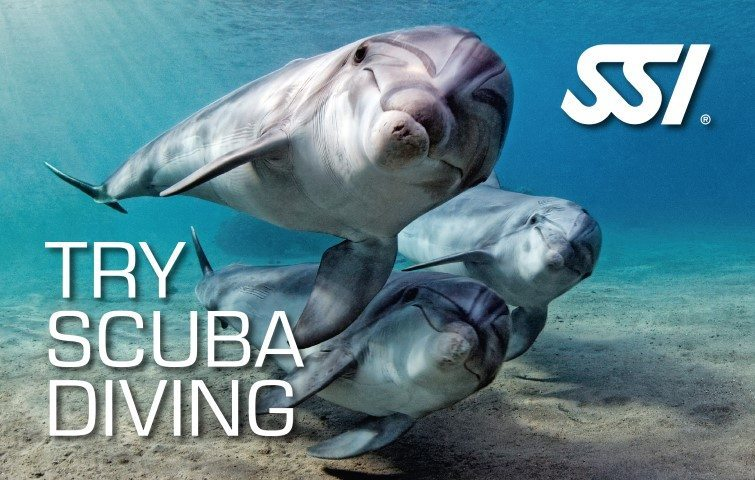 SSI Try Scuba Diving | SSI Try Scuba Diving Course | Try Scuba Diving | Basic Course | Diving Course | Eko Divers