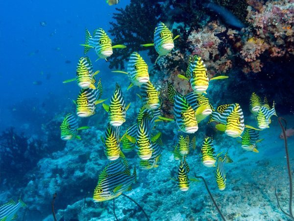 Bintan Mapur Island | Bintan | Mapur Island | Mapur Island Marine | Marine Life Bintan | Mapur Fishes | Mapur Island Marine Life | Eko Divers