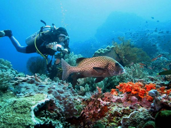 EKO Featured Bali | Eko Divers