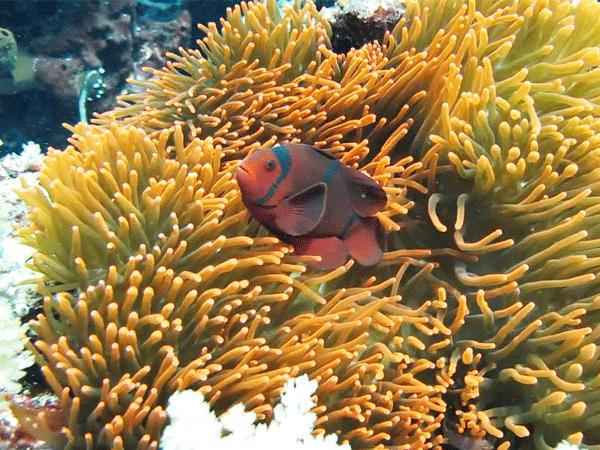 Sachikos Point Manado | Manado | Sachikos Marine Life | Manado Marine Life | Sachikos Point | Sachikos | Eko Divers