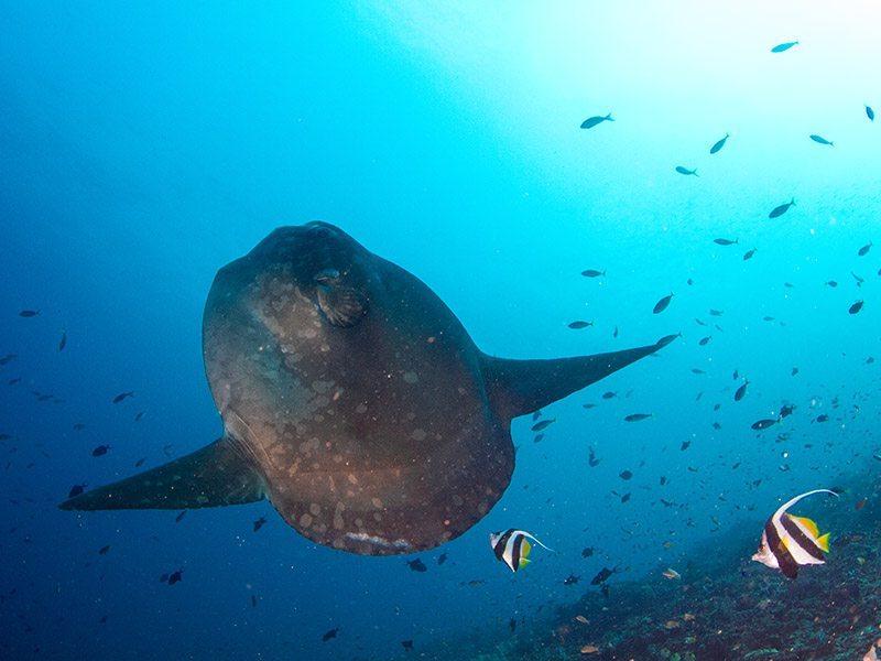 Dive Trips Bali Indonesia | Eko Divers
