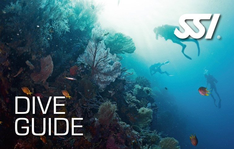 SSI Dive Guide Small Course | SSI Dive Guide Small | Dive Guide Small | Eko Divers | Diving Course