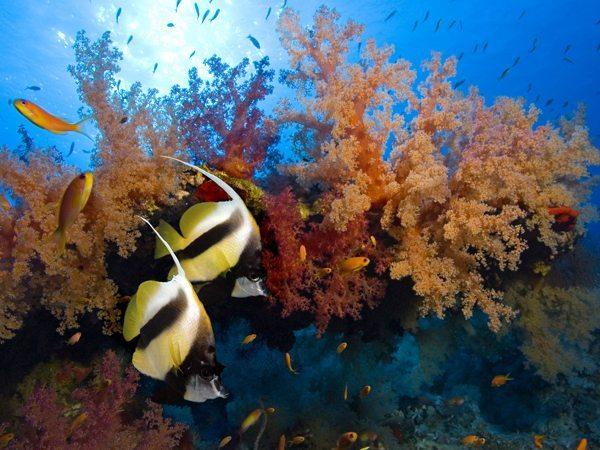 Diving in Hin Daeng and Hin Muang | Hin Muang | Hin Daeng | Hin Muang Marine Life | Hin Muang Marine Fish | Hin Muang | Aquatic Life | Hin Muang Aquatic Fish | Hin Daeng Marine Life | Hin Daeng Marine Fish | Hin Daeng Aquatic Life | Hin Daeng Aquatic Fish | Fish | Fishes | Eko Divers